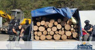 арести на престъпна група за незаконна сеч и търговия с дървен материал