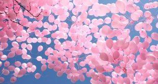 Розови балони