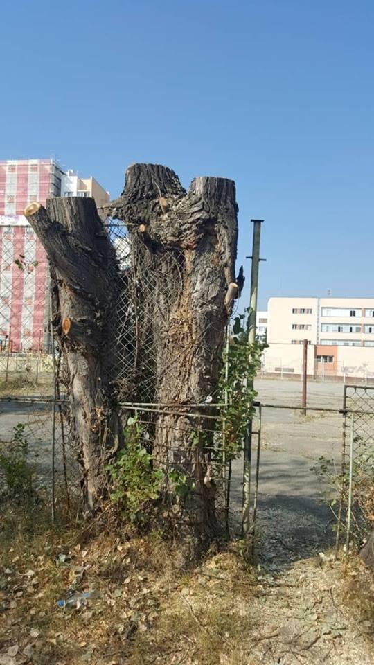 отсечени дървета в Дружба1