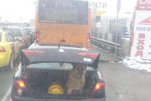 Куче в багажник
