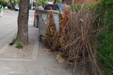отрязани клони и тротоар