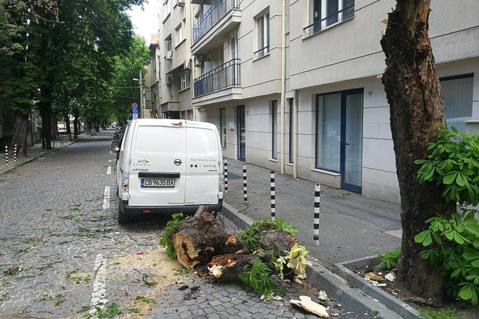 Дърво падна  върху автомобил на ул. Тимок в район Сердика