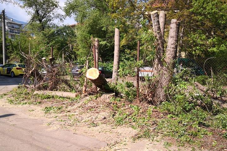 Отрязани дървета на ул. Яна Язова, кв. Витоша, район Лозенец