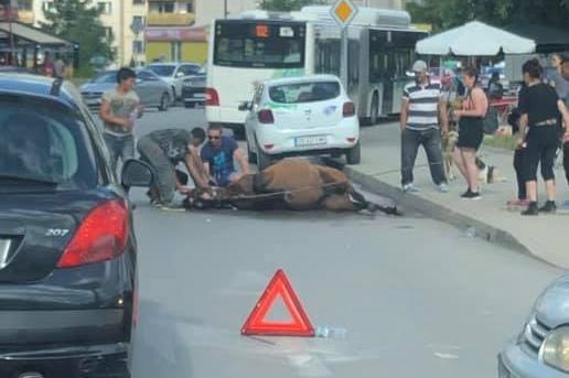Инцидент с кон в Студентски град