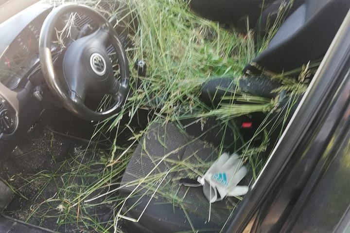 Трева в колата в Студентски град