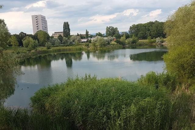 Езерото в Дружба  1