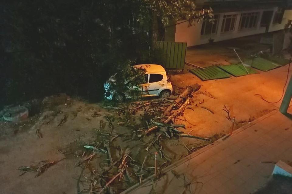 Паднало дърво в Лозенец