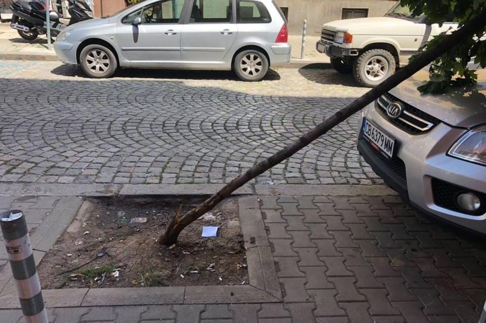 Прекършиха дърво на ул. Паренсов и бул. Левски