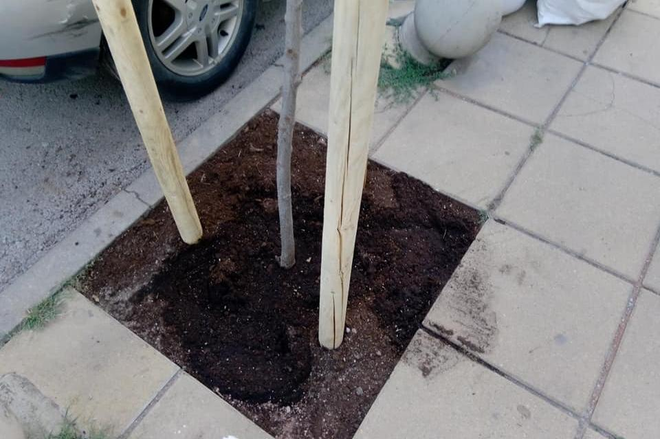 Засадиха дръвчета по ул. Пирин в Манастирски ливади-Запад