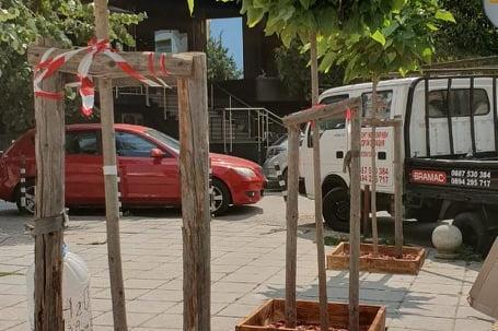 Новозасадени дръвчета по ул. Пирин, район Витоша