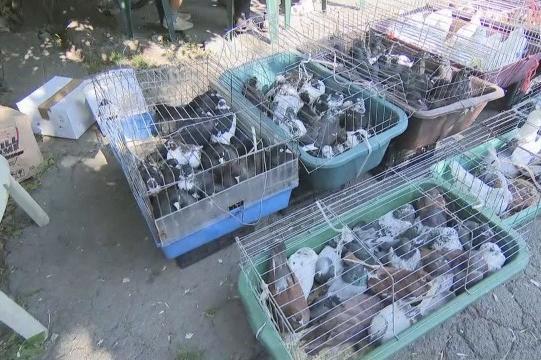 животински пазари