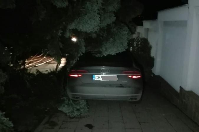Дърво падна върху кола в столичния кв. Гърдова глава