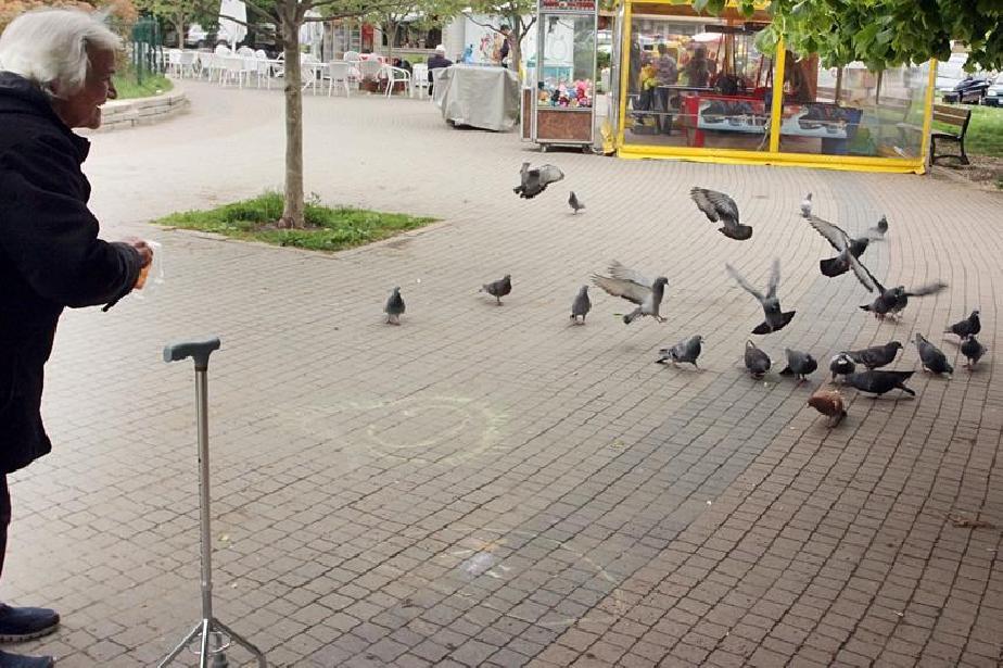 Предколедна раздумка с кмета в парк гео Милев в Слатина