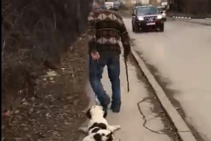 Иван Попов тормози куче в Дървеница