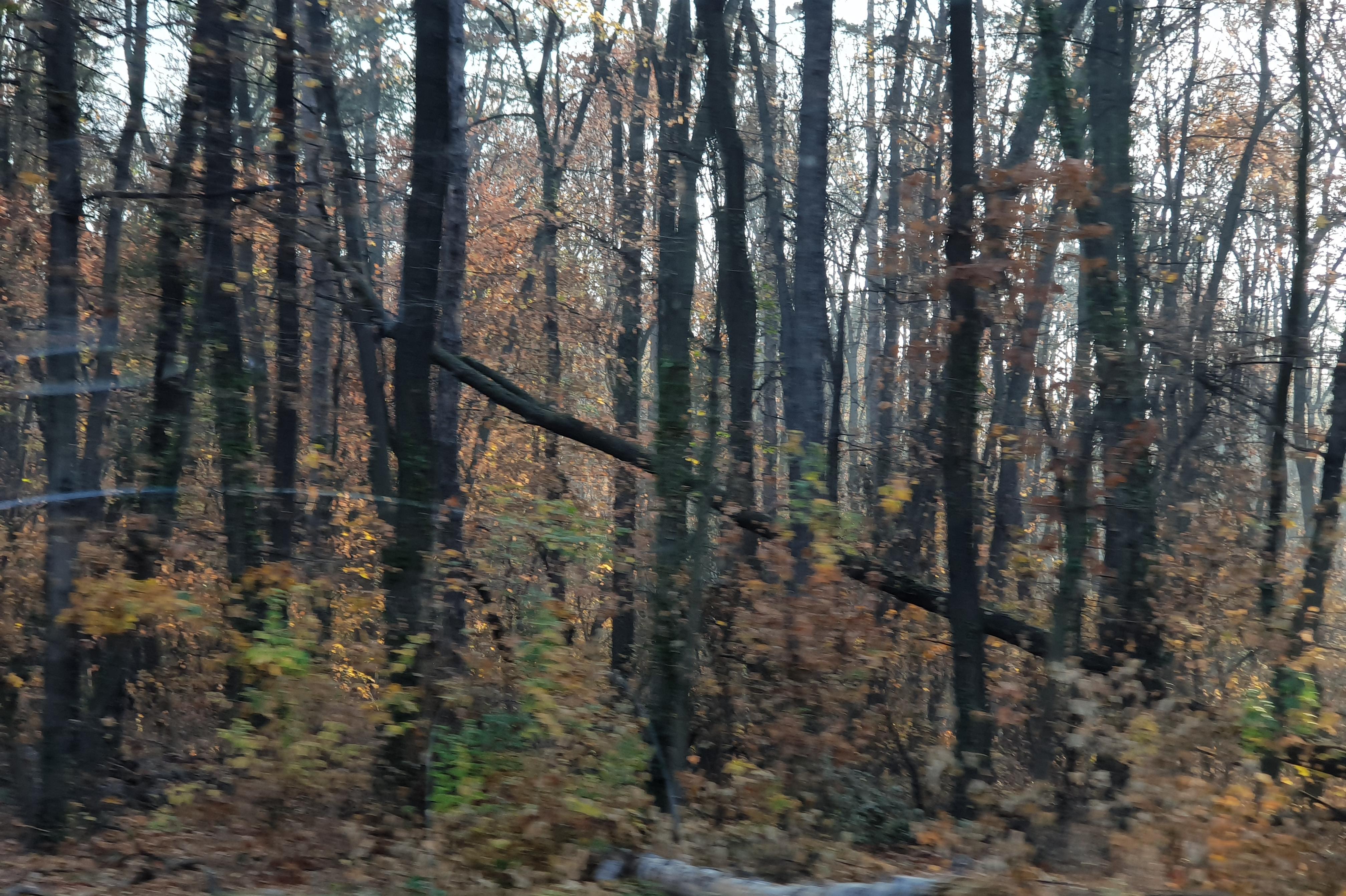 Дирекцията по горите- София е направила 11 акта на нарушители за 10 дни