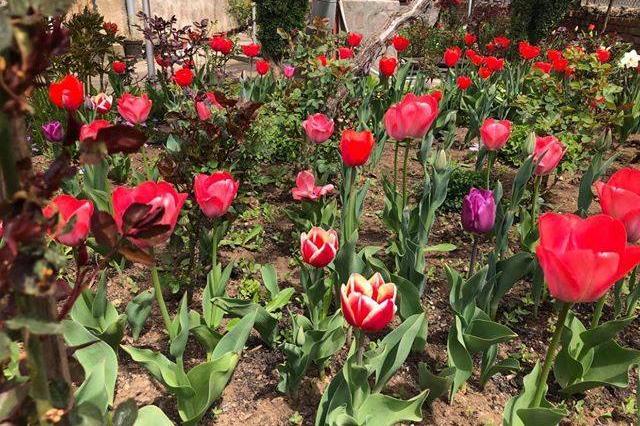 """В """"Нови Искър"""" търсят кой има най-красивия и пъстър пролетен двор"""