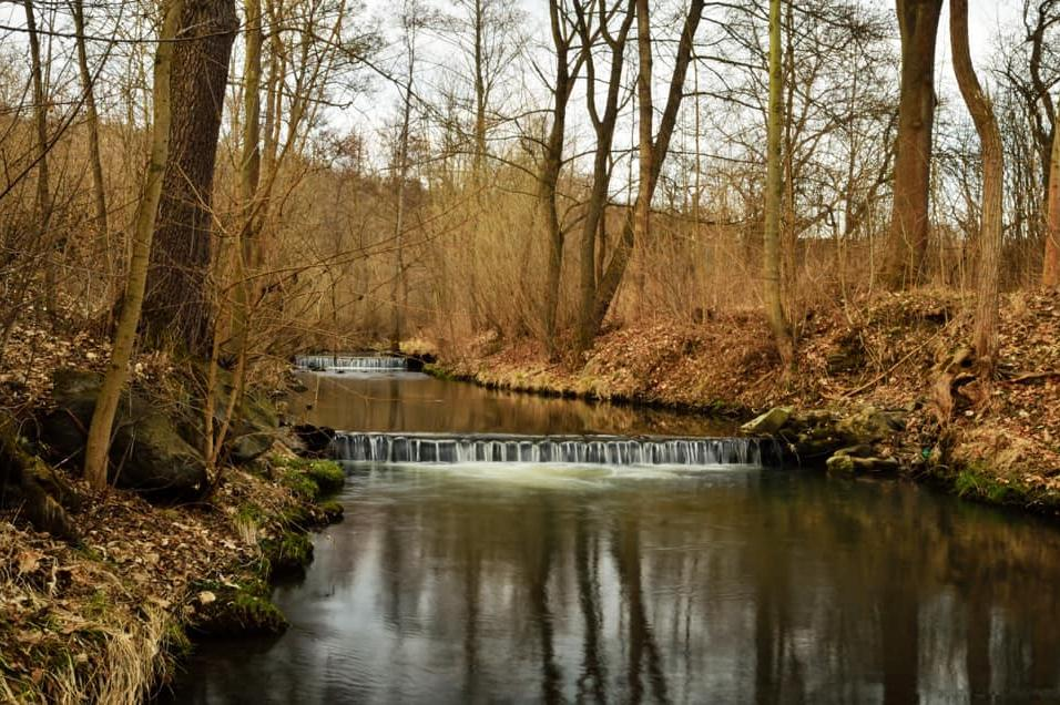Чистят коритото на река Новачица от паднали клони и отпадъци
