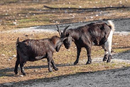 Първите бебета за тази година се родиха в Софийския зоопарк