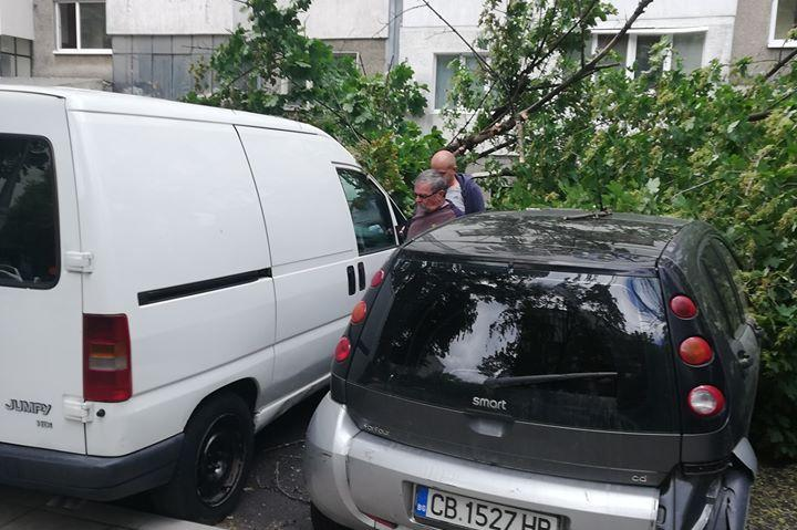 Дърво падна в жк Сердика, 3 коли са пострадали (СНИМКИ)