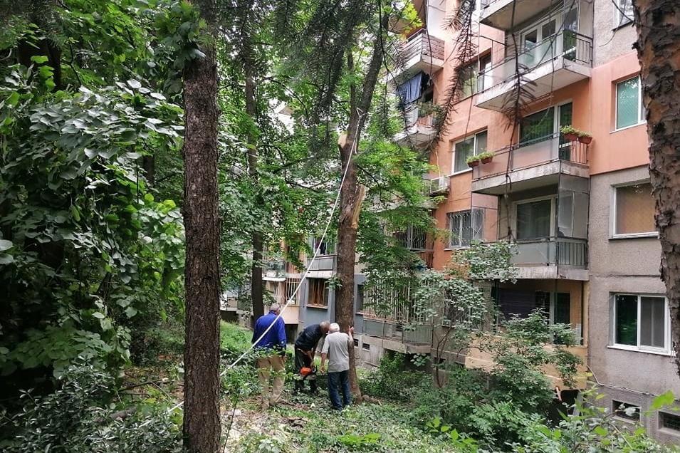 """Махнаха опасно дърво пред бл. 47 в """"Дианабад"""""""