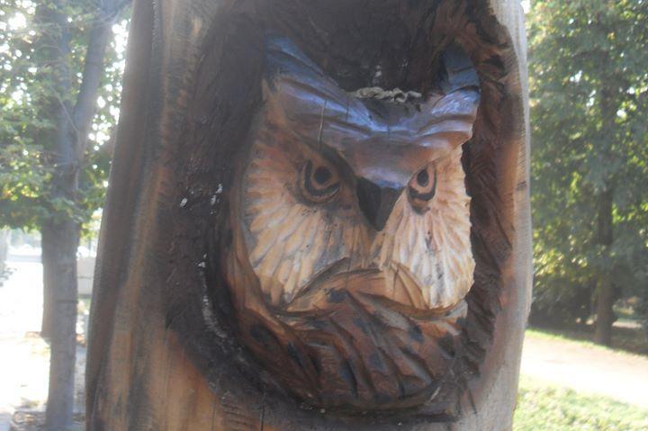 Реставрират дървото с орлите в Банкя