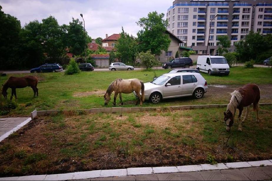 Коне излязоха на паша в Модерно предградие