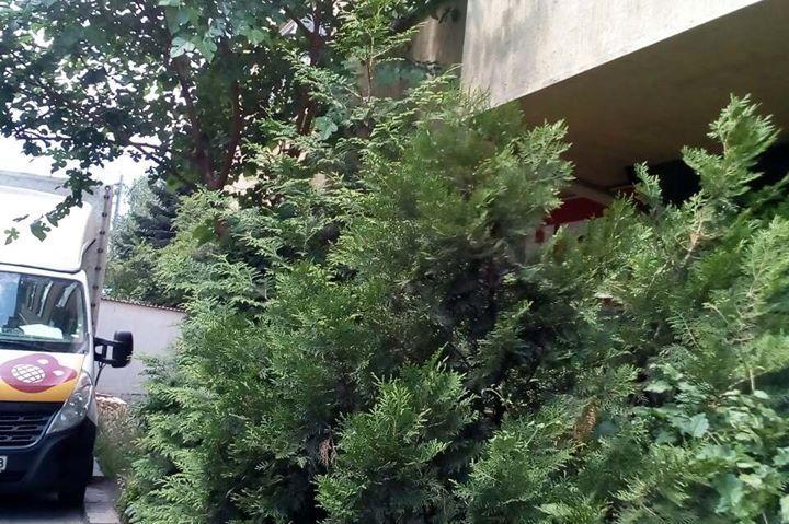"""Подрязаха храстите и почистиха растителност в столичния """"Гоце Делчев"""""""