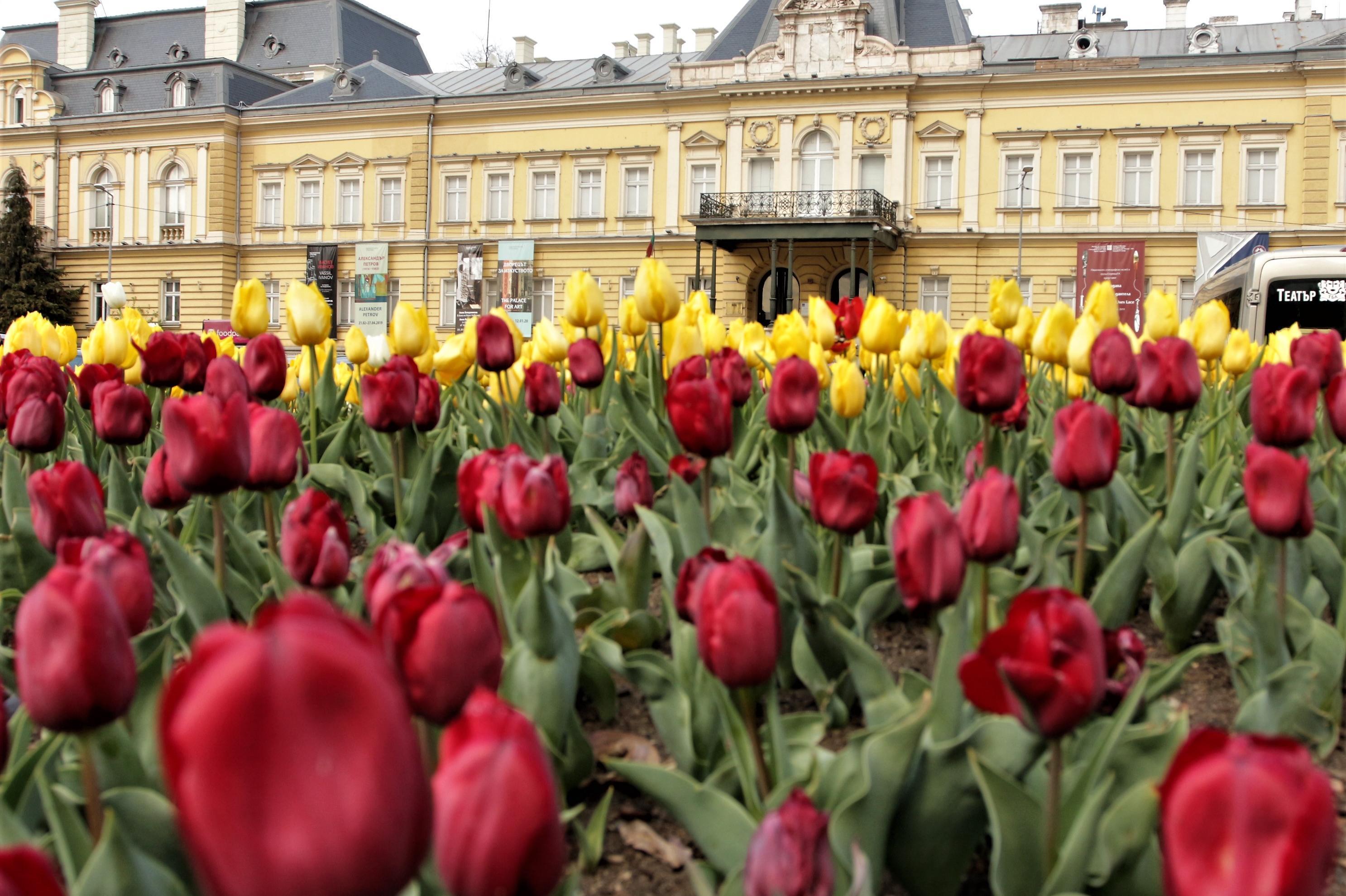 От Столичния инспекторат боядисват пейки и садят цветя за Деня на околната