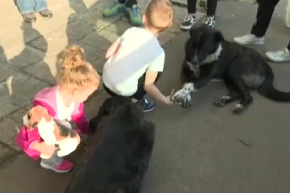 """Спор  между съседи в """"Овча купел"""" заради бездомни кучета"""