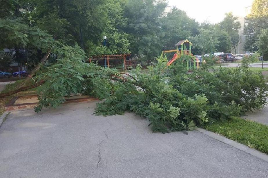 """Силният  вятър събори дървета в двора на 61 ДГ в """"Слатина"""""""
