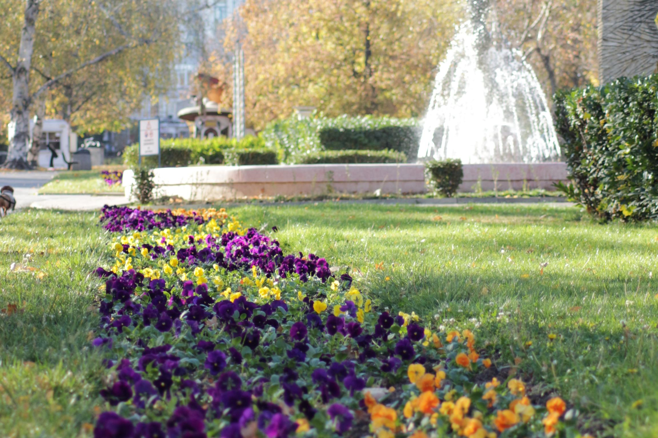 """Роботчета- пчелички за най-малките  на """"Зелени библиотеки"""" в парка """"Заимов"""""""