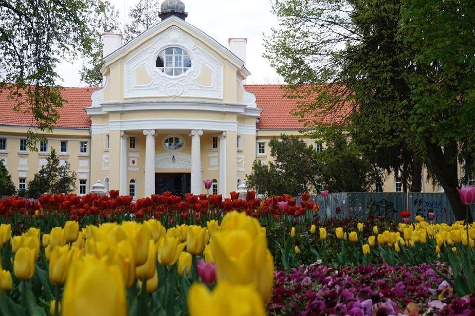В Банкя отменят Лятното кино заради неспазване на COVID-мерките