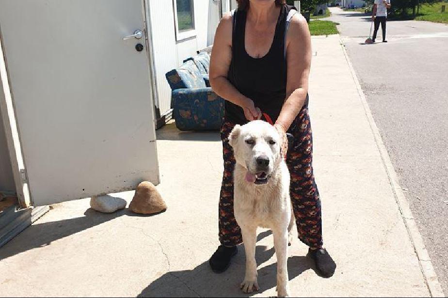 За юли: 101 кучета от общинските приюти са намерили нов дом