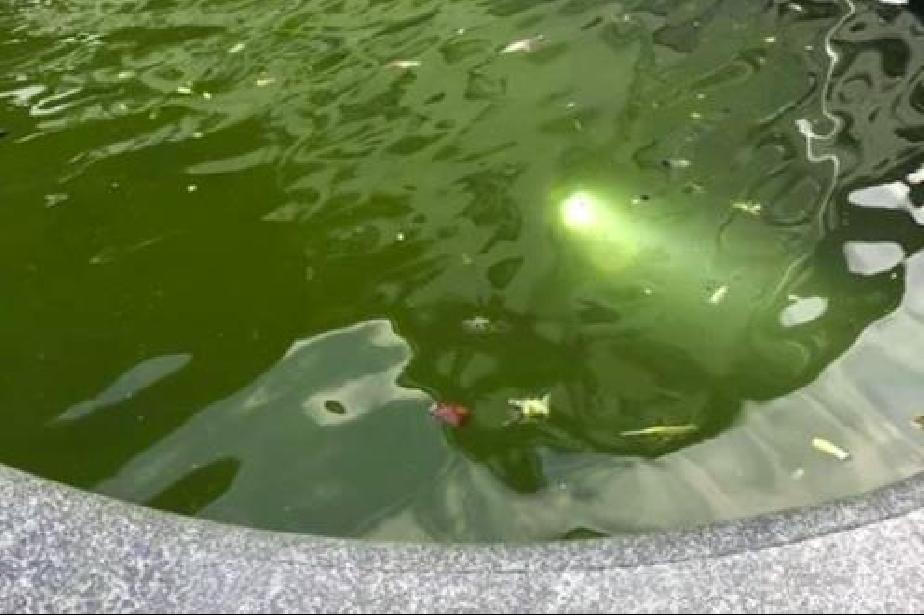 """Шадраванът на пл. """"Славейков"""" тиняса, водата позеленя от мръсотия"""