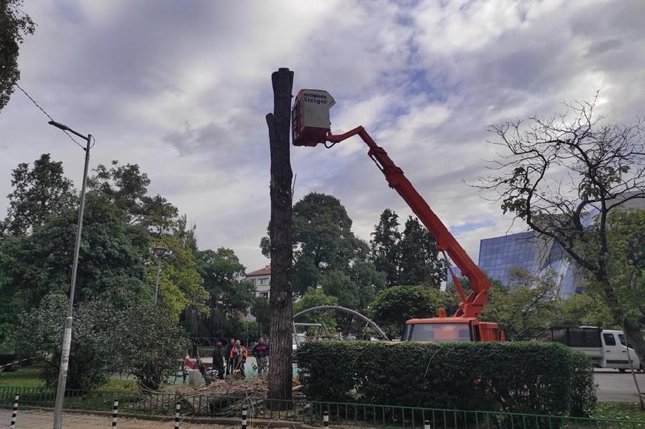 Премахнаха изсъхнала и опасна топола в парк Буката