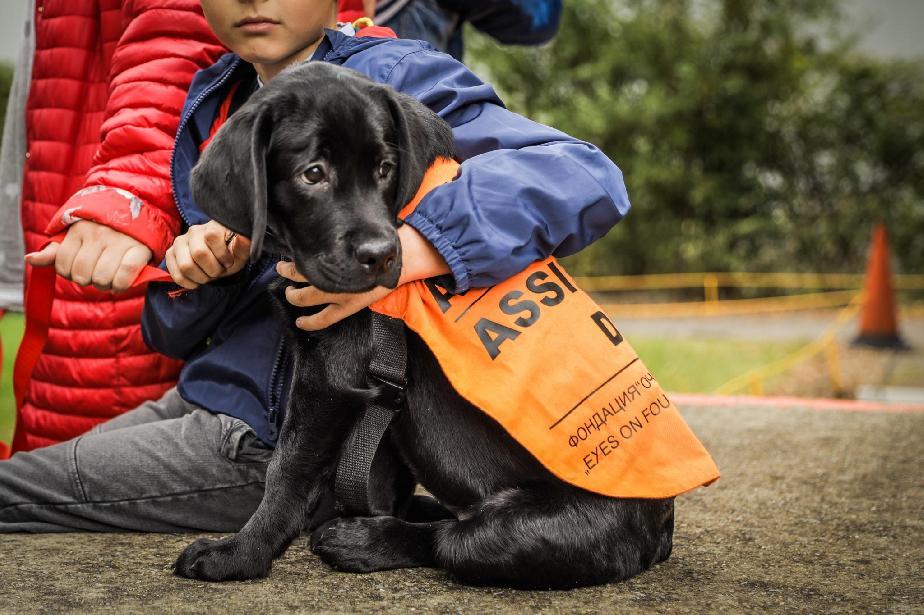 """""""Очи на четири лапи"""" започват обучение на кучета за деца с аутизъм"""