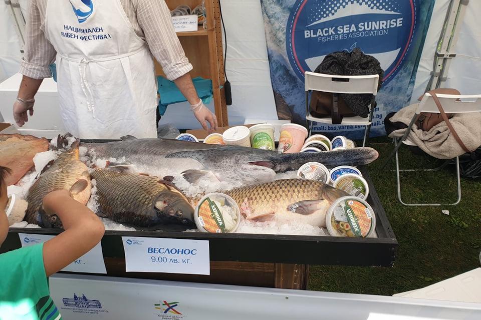 Фестивал на рибата