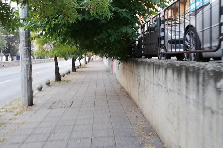 Дървета пречат на пешеходци в Банишора