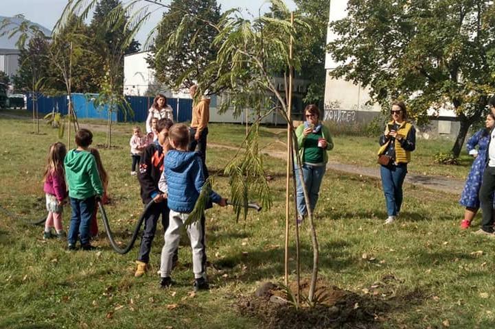 Засадиха 17 широколистни фиданки в Младост 1А (СНИМКИ)