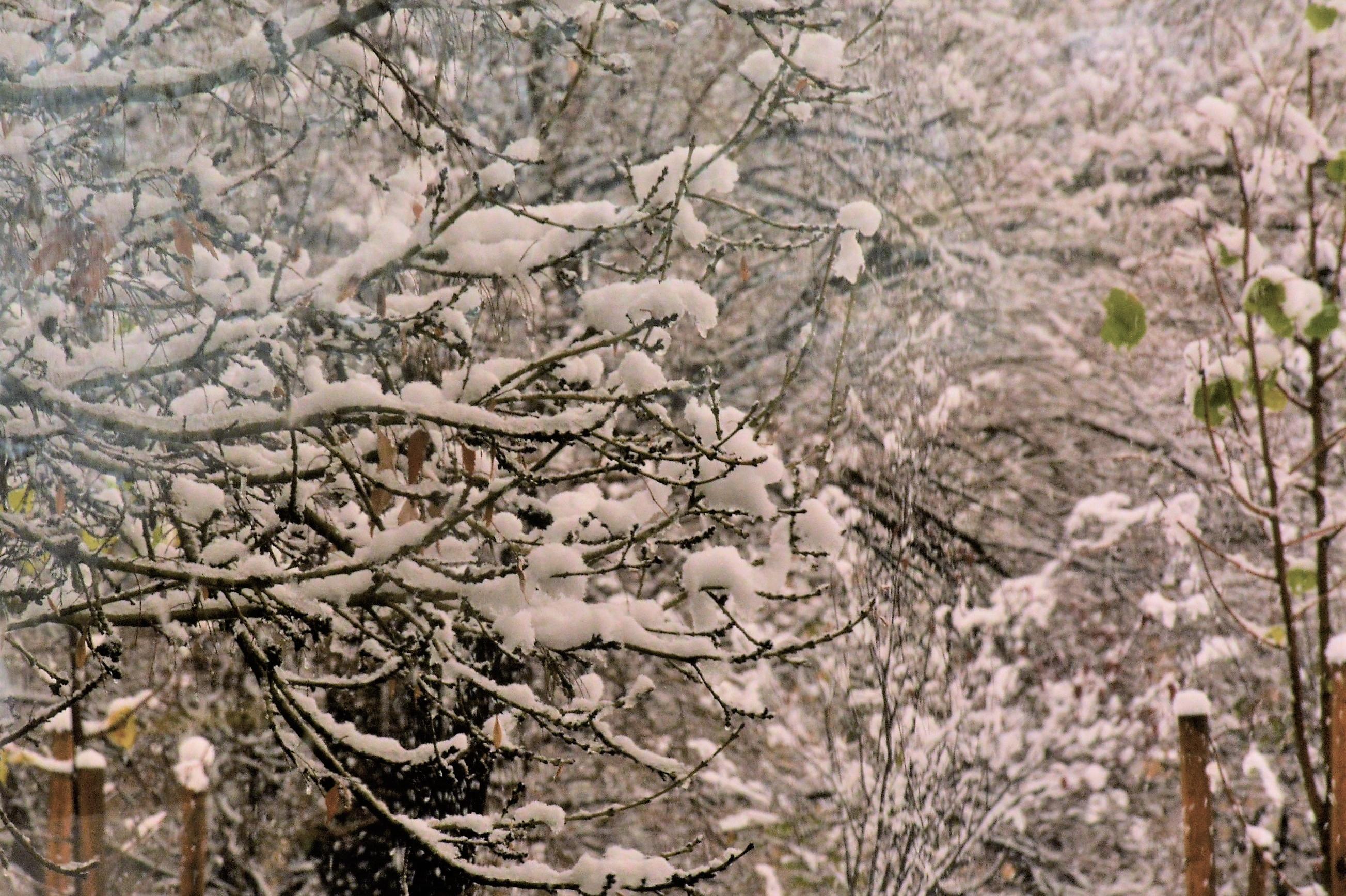 Първи снежинки на Витоша