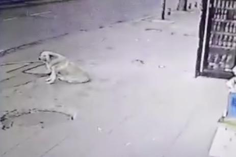 Мъж прободе куче с нож в Надежда 4