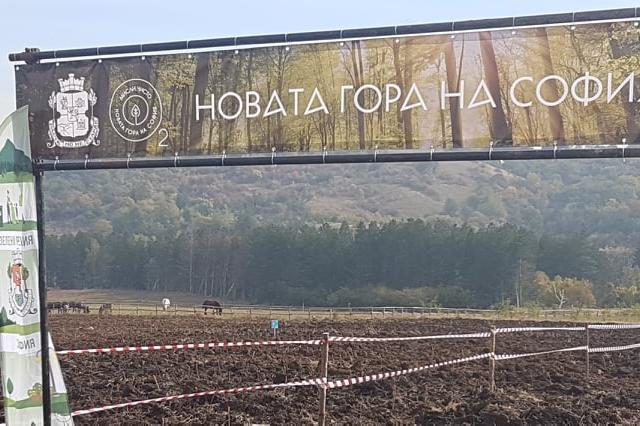 Само за три уикенда: Близо 10 000 фиданки в Новата гора на София