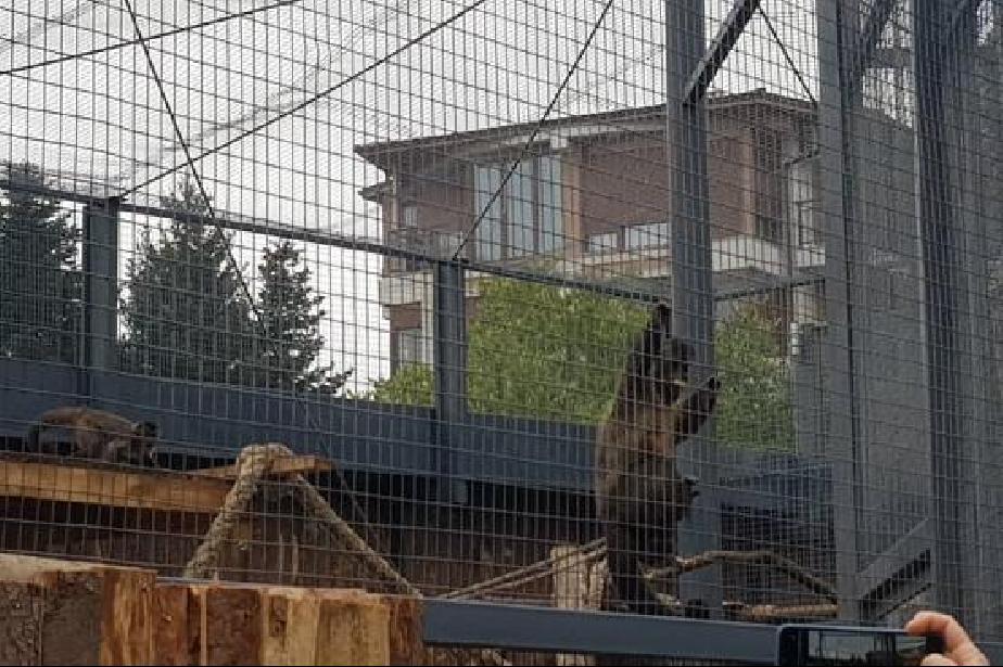 Столичният зоопарк остава отворен, посетителите до 17 часа
