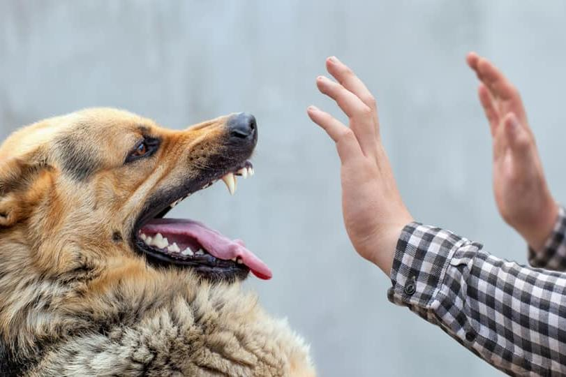 Безпризорни кучета тормозят столичани в Кремиковци