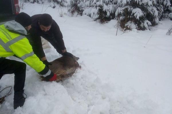 АПП спасиха бедстваща сърничка в Бояна (СНИМКИ)