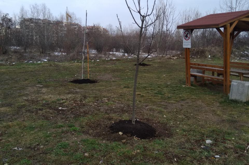 Наториха 94 дръвчета в Студентски град, Дървеница и Мусагеница (СНИМКИ)