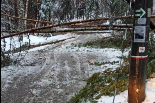 Паднали дървета блокираха пътната отсечка в м. Брезите (СНИМКИ)