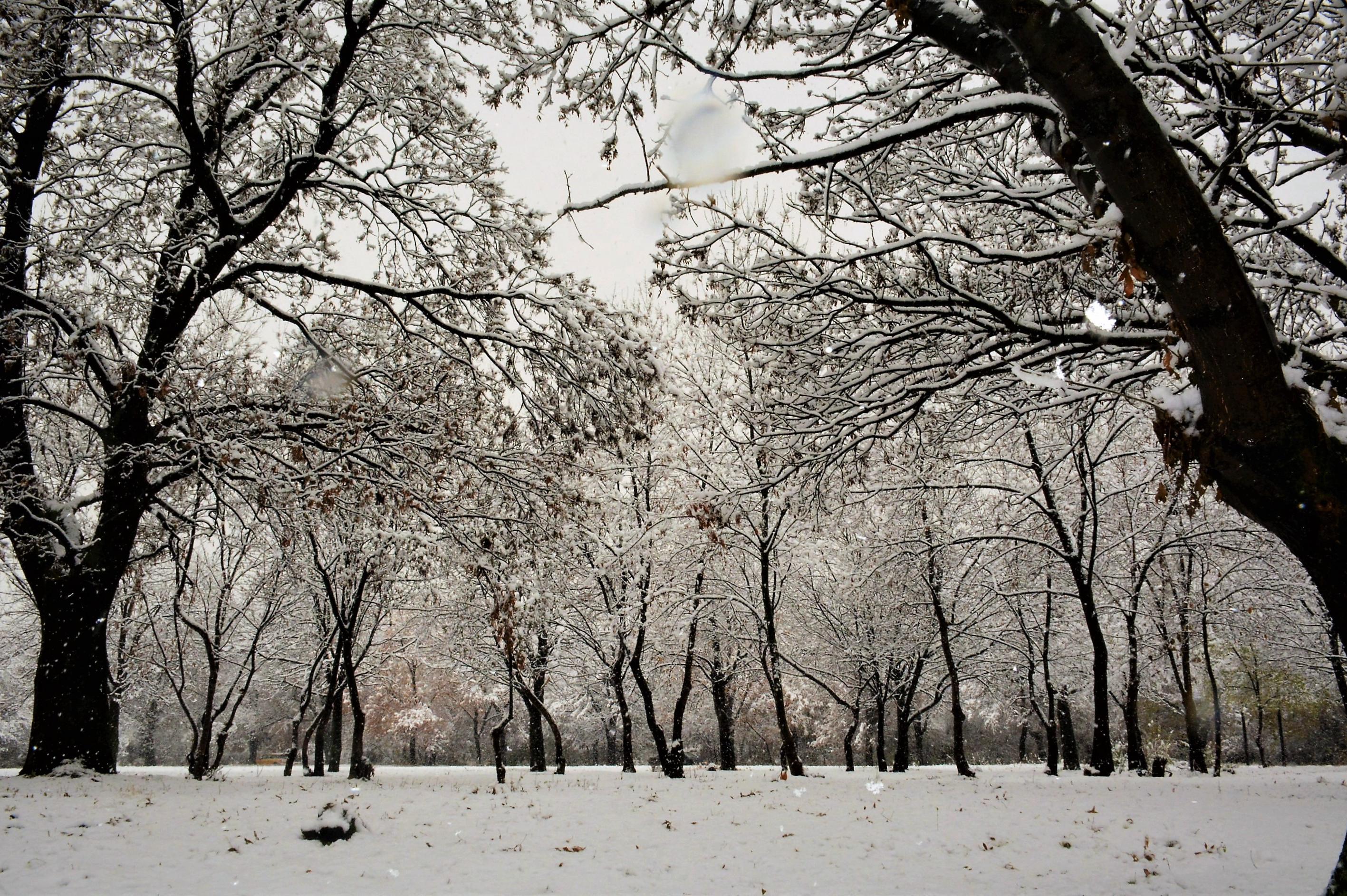 В събота снегът ще дойде в София