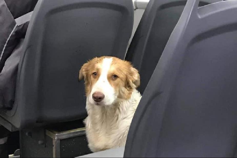 Столично куче се вози в автобус №82, издирват се стопаните (СНИМКИ)
