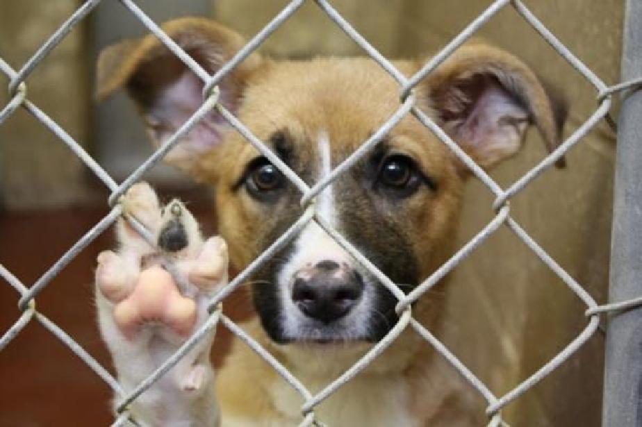 В София 1321 бездомни кучета са осиновени през 2020г.